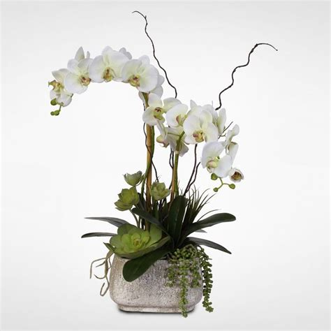 Phalaenopsis Orchid Centerpiece Planning Our Best 25 Potted Orchid Centerpiece Ideas On