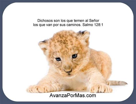 imagenes con leones cristianas im 225 genes cristianas con vers 237 culos biblicos 2017 avanza