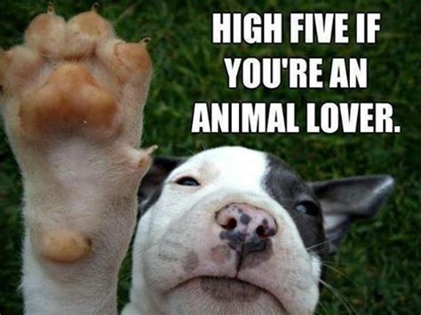 Dog Lover Meme - animal lovers pictures photos and images for facebook