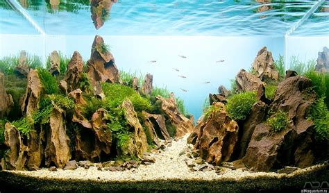 aquascape design basics artists create mesmerizing miniature worlds all within