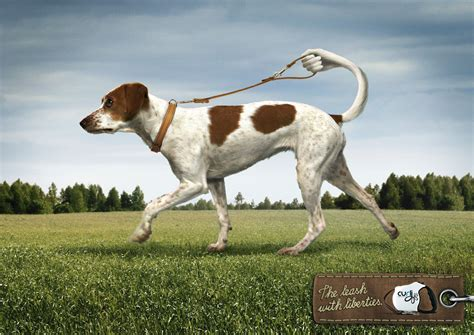 puppy ads curli print advert by interone 1 ads of the world