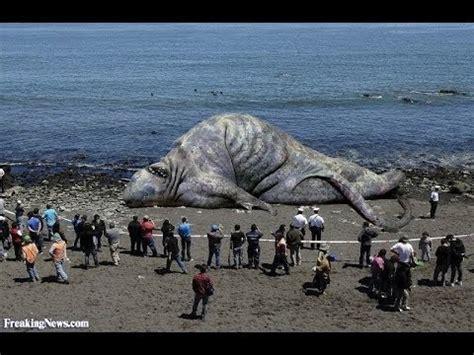 giant sea monster found dead in khmer krom cambodia