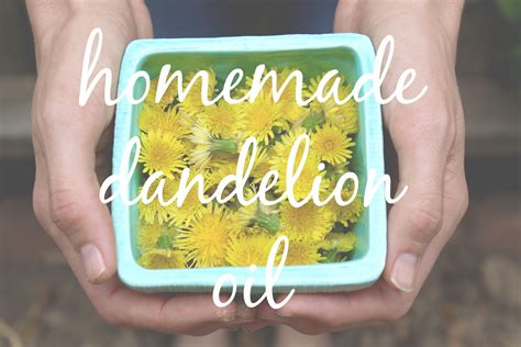 100 how to make a dandelion how to make a headache salve the homestead garden the step by