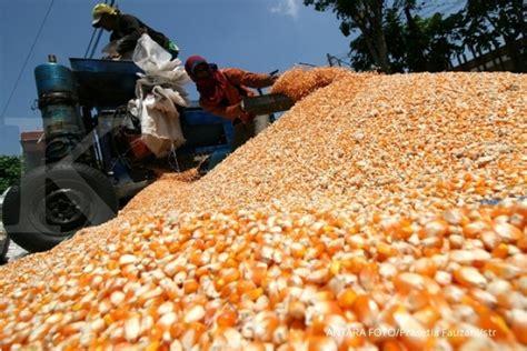 daftar harga jagung terbaru mei 2018 macam harga terbaru