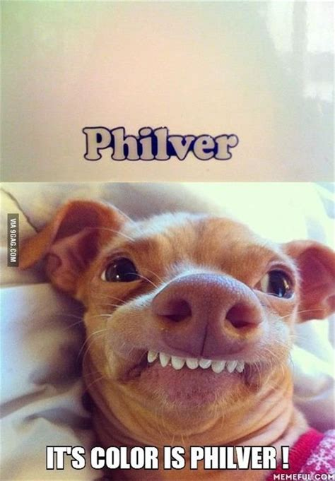 Phteven Meme - when your dog is asleep aww