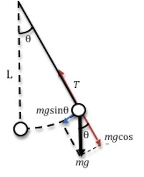 design an experiment look at figure 8 7 lab 7 simple harmonic motion