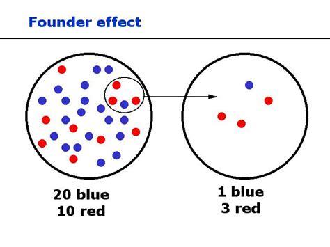 founder effect dragonflyissuesinevolution13 wiki