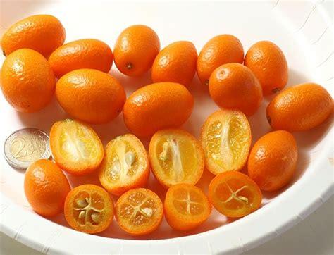 Tanaman Jeruk Nagami Bundar 1 6 tanaman hias buah rekomendasi kami