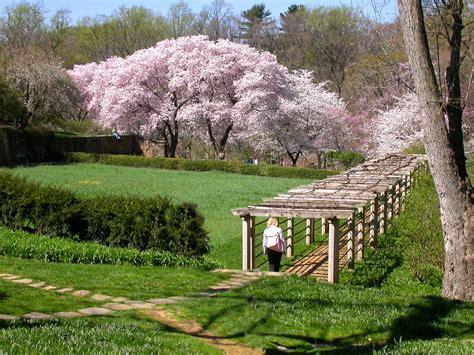 Dumbarton Oaks Gardens dumbarton oaks at cherry blossom time