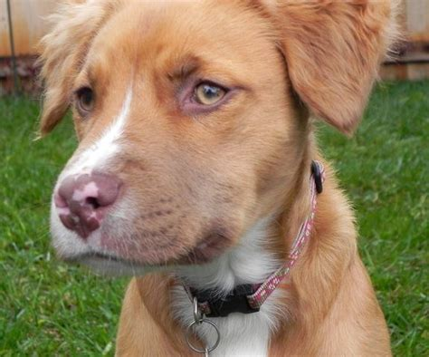 how to stop a pitbull puppy from biting how to get pitbull puppy from biting grasscity pets what can dogs eat when out of