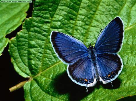 imagenes de mariposas reales bonitas fotos de mariposas i