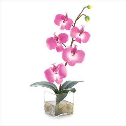 Orchids In A Vase by Orchid In Glass Vase