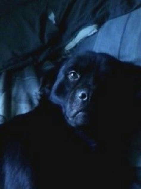 craigslist lost dogs 17 best images about lost found pets in s c on color black lost and