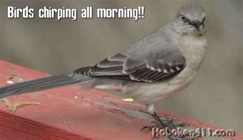 birds chirping all night and morning