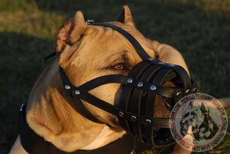 muzzle for pitbull buy leather basket pitbull muzzle walking