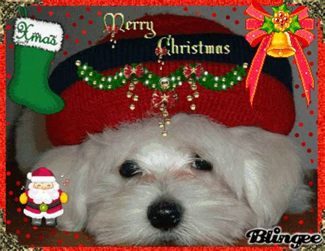 merry christmas dog picture  blingeecom