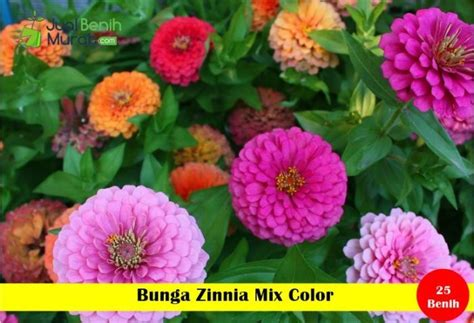 1 Pack Maica Leaf Bunga Zinnia Mix Color 25 S Seeds Murah Benih Bunga Zinnia Mix Color Maica Leaf Jualbenihmurah