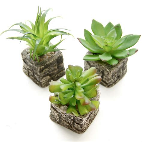 tiny potted plants 12 style small potted bonsai mini succulent plants