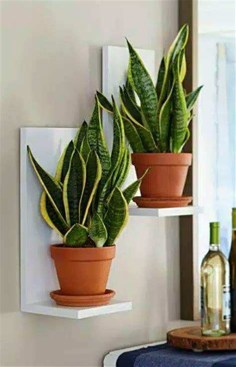 jual rak tanaman dinding rak kebun rumah dudukan pot