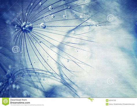 beautiful blue dandelion background stock photo image