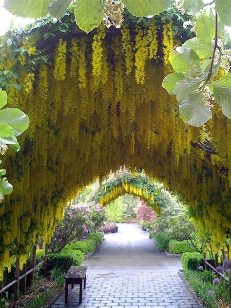 good christmas tree farm washington state 125 best whidbey island washington united states images on whidbey island