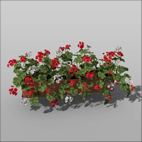 Flower Box 3 pelargonium flower box silva3d