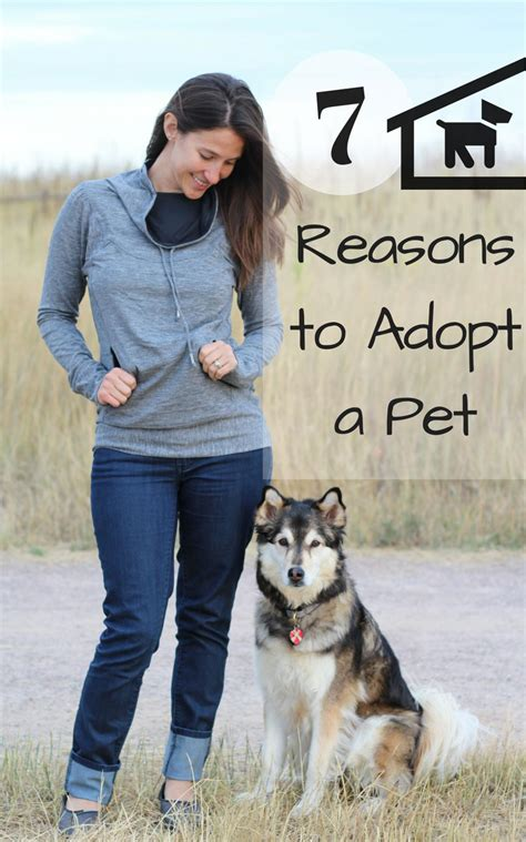 adopt a denver 7 great reasons to adopt a pet with our best denver lifestyle