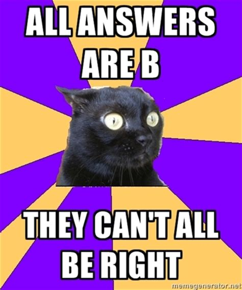 Anxiety Cat Memes - anxiety meme related keywords suggestions anxiety meme