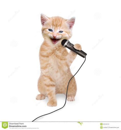 cat singing cat kitten singing into microphone royalty free stock