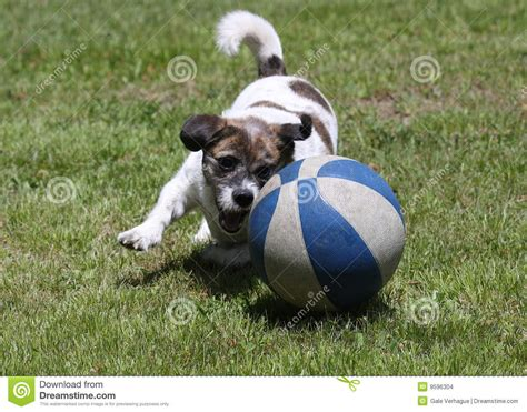 playful dogs playful stock images image 9596304