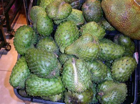 graviola tree fruit for sale forum graviola tree or soursop
