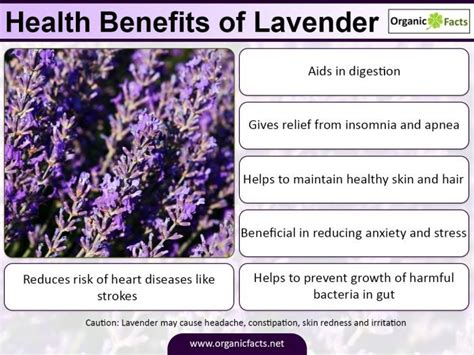 Hair Dryer Benefits And Side Effects lavender tea benefits side effects low carb foods list weight loss