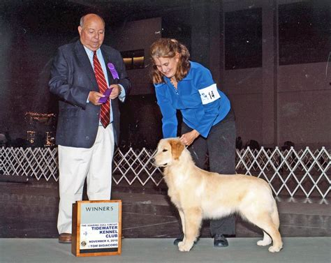 golden retriever rescue richmond va golden retriever breeders virginia dogs in our photo