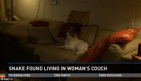 snake couch michigan woman finds four foot snake living in her second