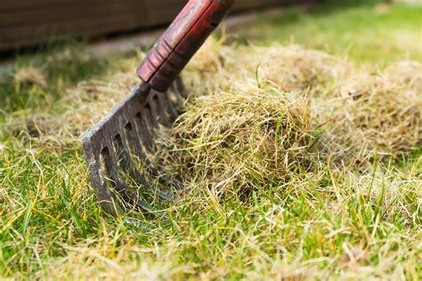 Vertikutieren Rasen Wann by Rasen Vertikutieren Warum Wann Wie Oft Plantura