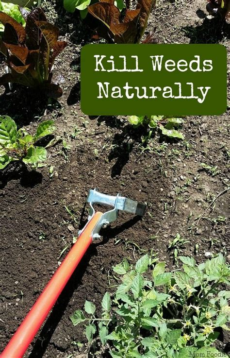 how to kill weeds in flower beds kill weeds naturally mom foodie