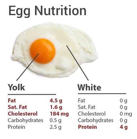 protein 1 egg eggs friend or foe