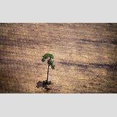 Amazon deforest...