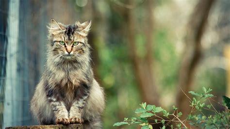 imagenes wallpapers gatos wallpapers gatos hd im 225 genes taringa