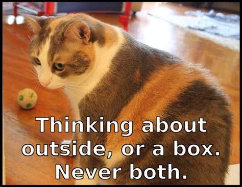Thinking Cat Meme - treasured memes image memes at relatably com