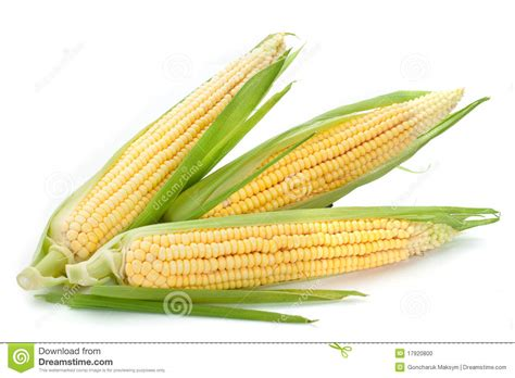 ear of corn stock photo image 17920800