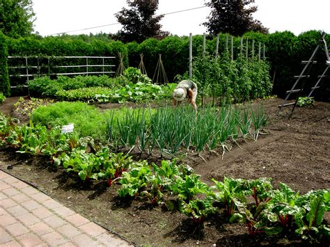 Shade Vegetable Garden Garden At Pineland Farms Carolyn S Shade Gardens