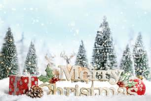 Christmas card quotes cute christmas quotes christmas card quotes cute