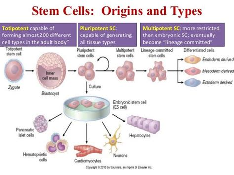stem cell research thesis statement embryonic stem cell research thesis statement