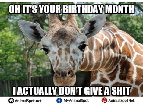 Giraffe Birthday Meme - giraffe birthday meme giraffe memes