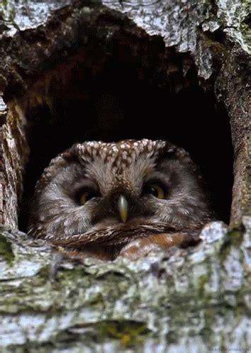 bird nest gif bird nest discover & share gifs