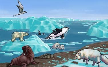 arctic clipart animal their habitat pencil and in color