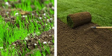 top 28 seed vs sod laying sod vs planting seeds centipede seed vs sod ehow uk organic