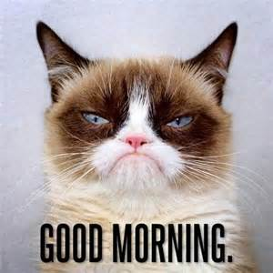 Grumpy Cat Good Morning Meme - 1000 images about grumpy 2 on pinterest gift quotes