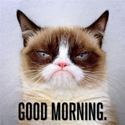 Grumpy Cat Meme Good - grumpy cat good morning meme 28 images good morning